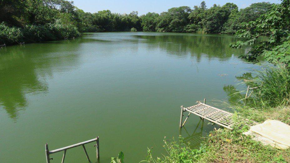 桃園市龍潭區低揚2號池,市府將耗資2800萬元,美化周圍景觀及步道,打造特色埤塘生態公園。記者張弘昌/攝影