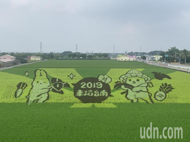 台南六甲稻田彩繪主角「ㄇㄚˊ幾兔」擁有超人氣。記者吳淑玲/攝影