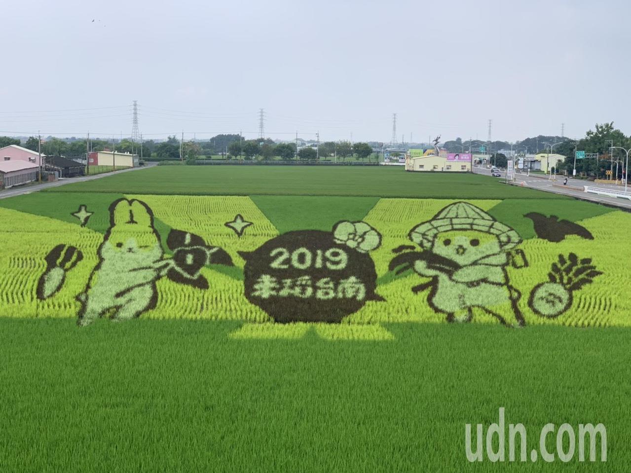 台南六甲稻田彩繪主角「ㄇㄚˊ幾兔」,今年首度採用3D呈現。記者吳淑玲/攝影