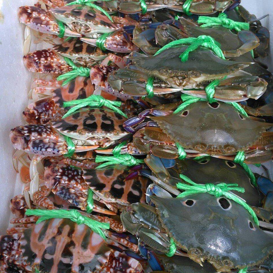 龜吼漁夫市集國慶日千元搶購 最大獎1萬元萬里蟹禮盒