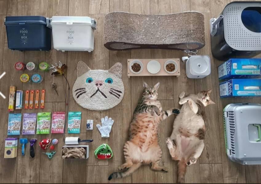 開箱挑戰風潮之下,有人也把寵物推上陣開箱。圖/取自auto.wprost.pl/...