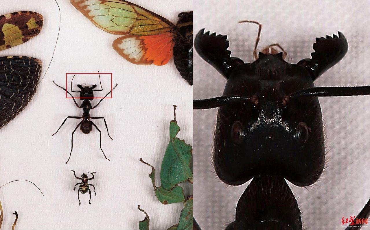 超高像素的照片在逐一放大後,昆蟲細節清晰可見。圖/取自紅星新聞
