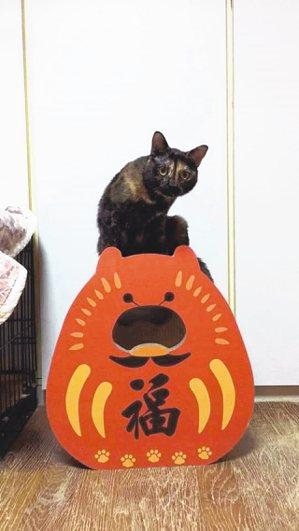 為了賺取更多照顧浪貓經費,江正民與女友有時會發起團購,大部分是寵物商品,家中貓隻...