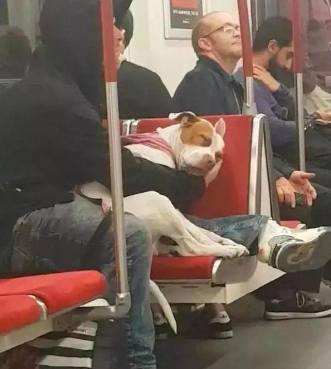 從影片中可見,男子一直用手托着狗狗的下巴。圖取自/Cheyenne Winger...