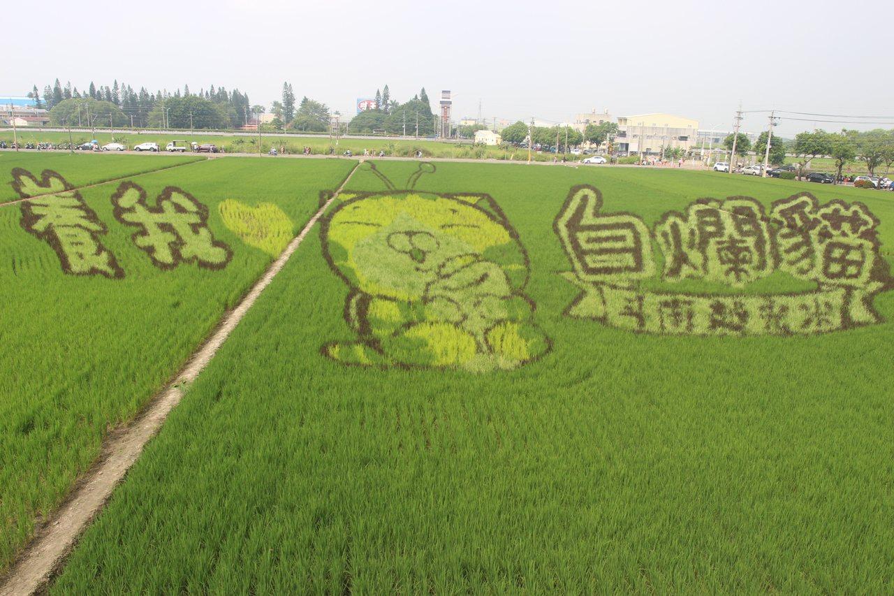 迎接雙十國慶假期,雲林縣斗南鎮農會打造白爛貓彩繪稻田,並舉辦斗南越光米蟲好懂吃市...