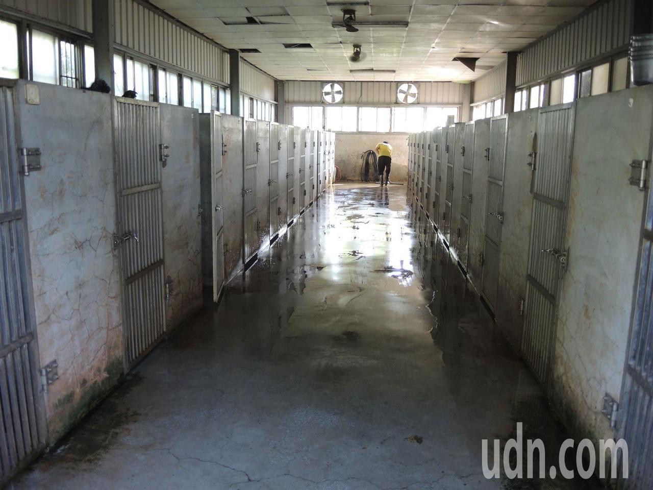 被爆料虐狗的桃園警犬學校,開放狗舍環境澄清,指PO網照是未清掃前的狗舍局部特寫照...