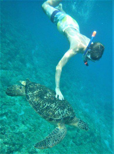 屏東琉球鄉民今天上午在美人洞海域拍攝到一名金髮碧眼的外籍青年觸摸海龜的畫面,po...