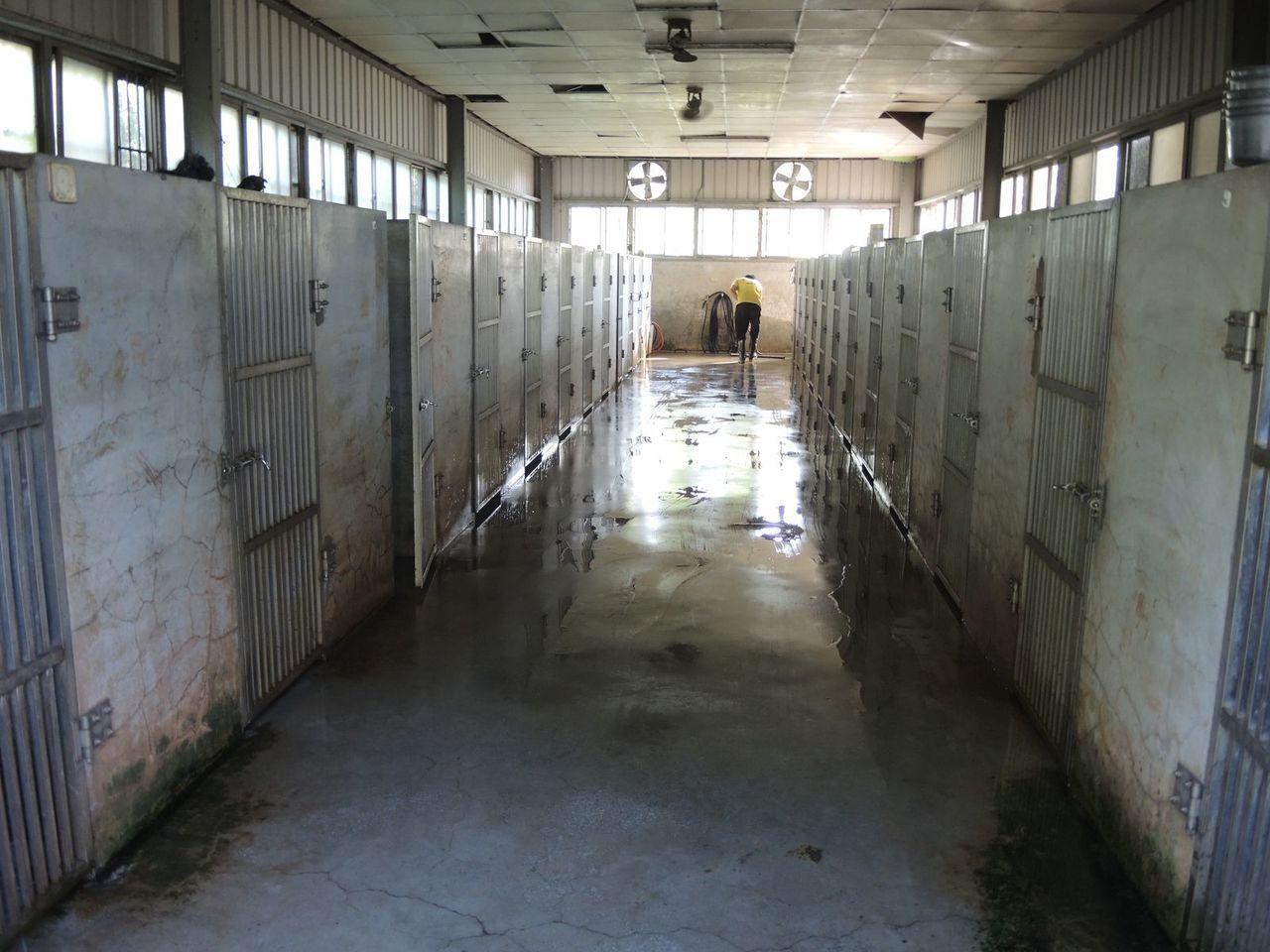 被爆料虐狗的桃園警犬學校澄清,指PO網照是未清掃前的狗舍局部特寫照。記者張弘昌/...