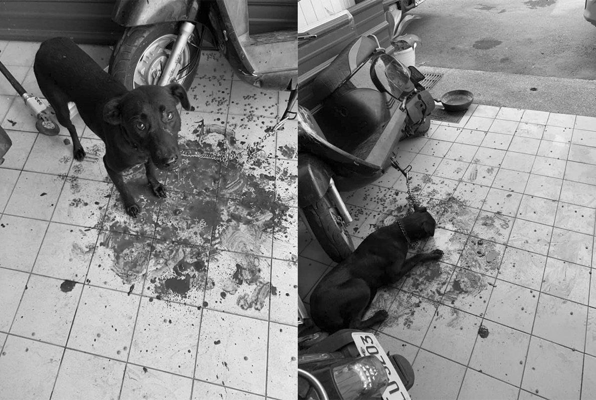 林姓飼主臉書張貼寵物妞妞被打吐血照片,引發數千網友怒斥施虐者。記者卜敏正/翻攝