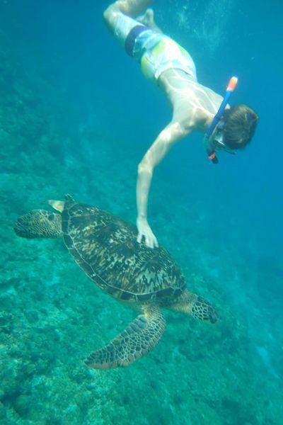 德籍男子在小琉球浮潛卻觸摸海龜,而遭人檢舉。圖/海巡署南部分署第五岸巡隊提供