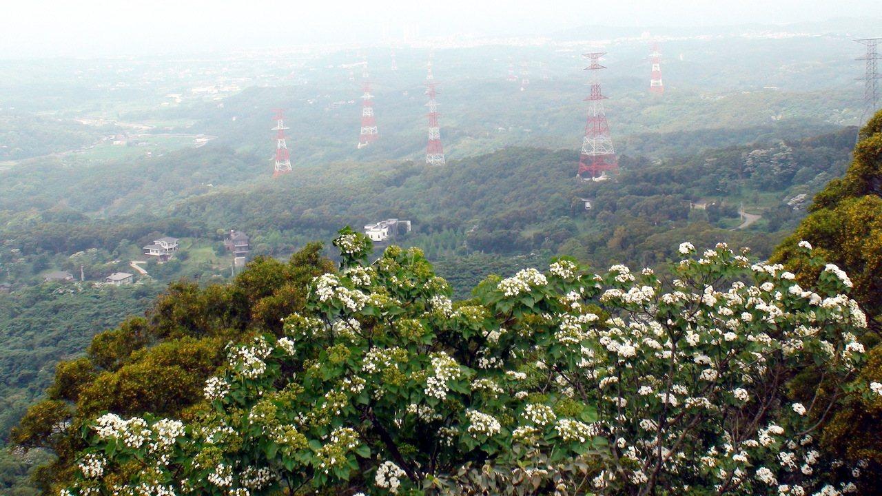台電架設「通霄-義和34萬5000伏特」輸電線路工程,其中通霄多達34支高壓電塔...