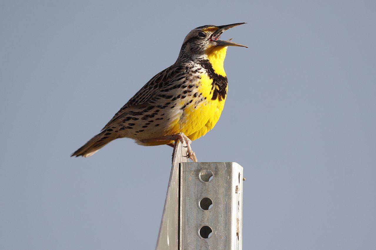 北美有三分之二鳥類以驚人速度消失。圖/世界日報提供