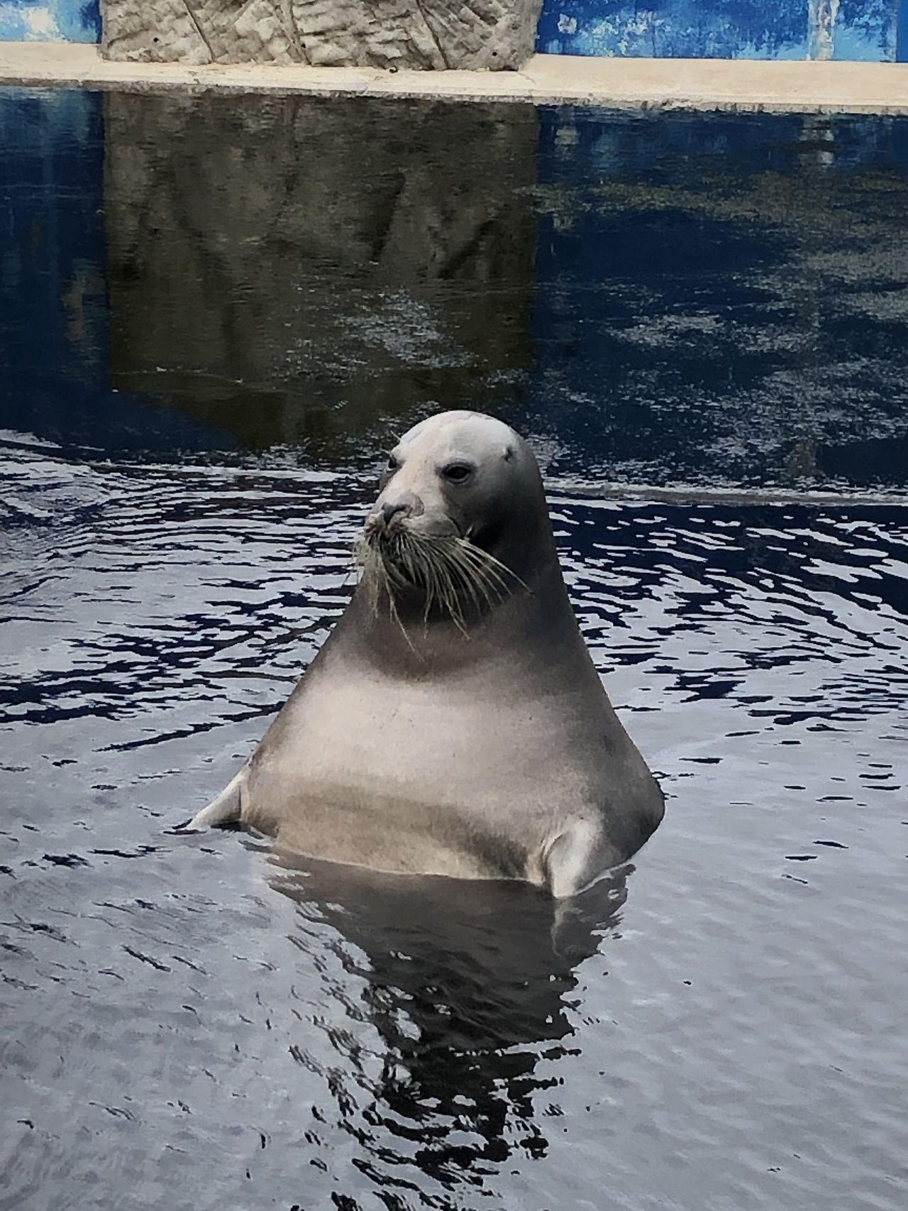 海豹耍廢實錄。圖翻攝自twitter「uruhira」