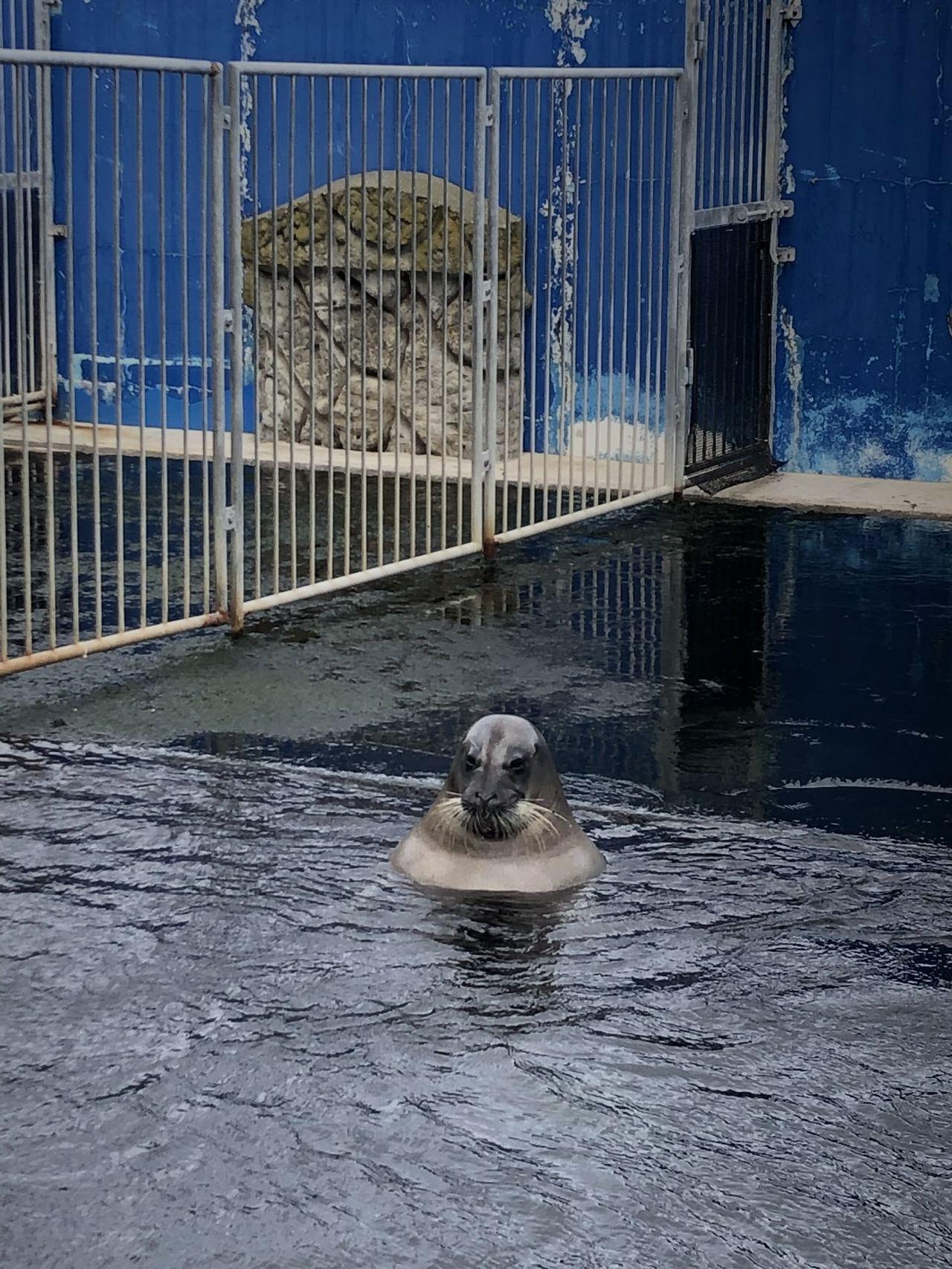 海豹在露天澡堂洗澡。圖翻攝自twitter「uruhira」