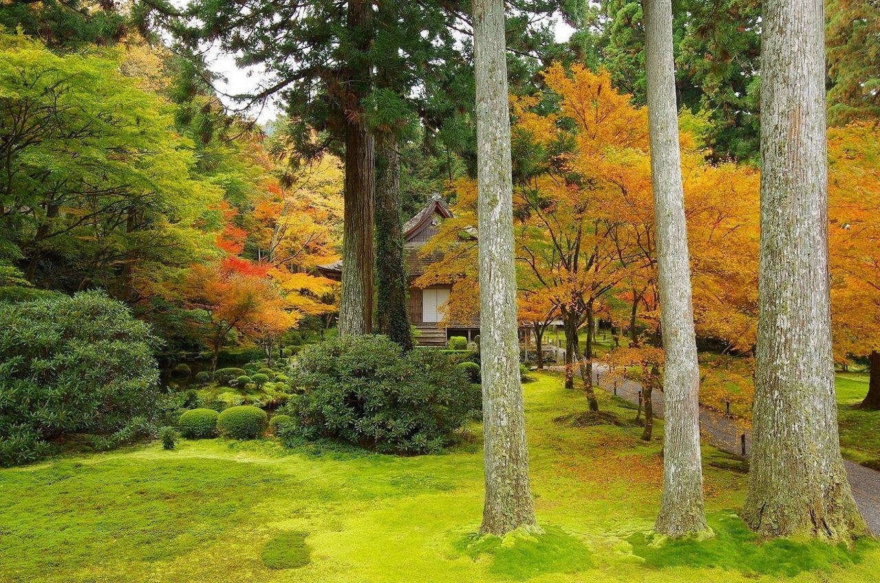 三千院擁有廣大的庭院,今年10月28日~11月28日期間也會舉行楓葉祭活動。圖/...