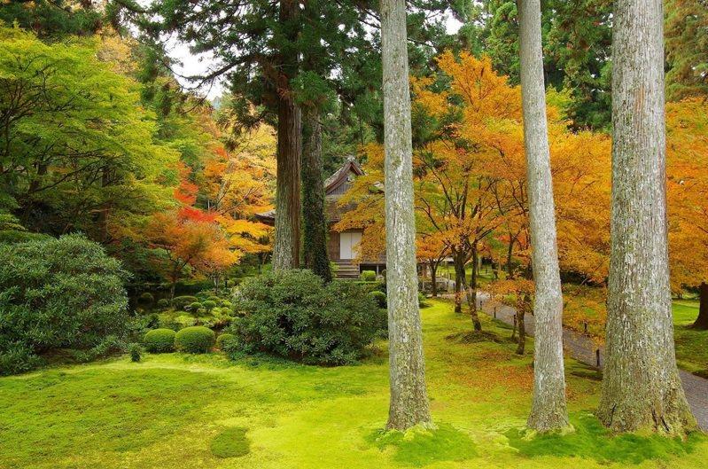 三千院擁有廣大的庭院,今年10月28日~11月28日期間也會舉行楓葉祭活動。圖/京都市台灣推廣事務所提供