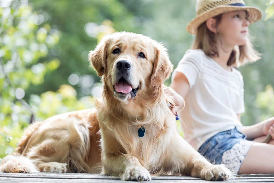 近期兩項研究均發現,經歷過心臟病或中風者,養狗能夠降低她們死亡的機率。 圖/in...