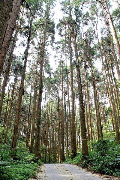 「得恩亞納」位於海拔1400公尺,進入社區道路兩旁是原始森林。記者卜敏正/攝影