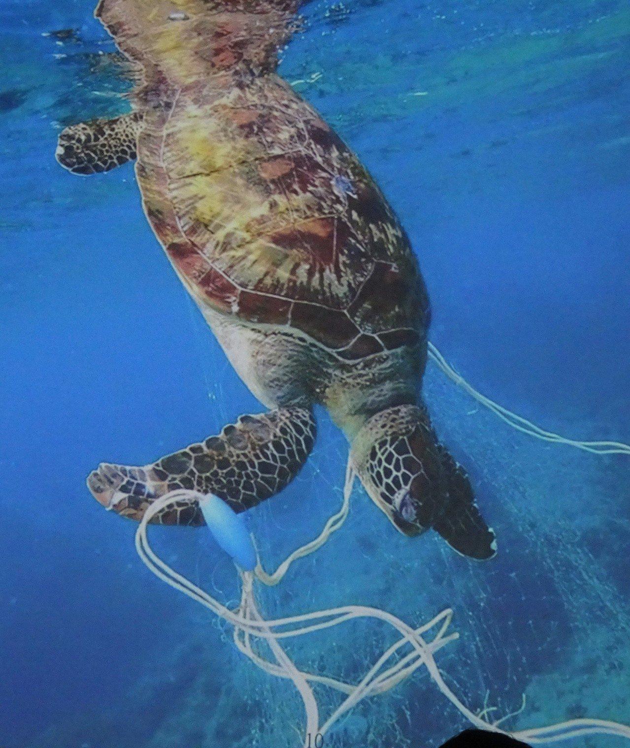 不再是海洋生物隱形殺手 廢漁網變身貼心生活小物