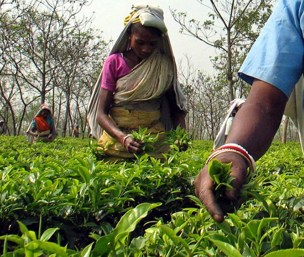 樂施會的研究顯示,為英國大型連鎖超市供應蔬果茶葉的農場與茶園,工人待遇差。路透