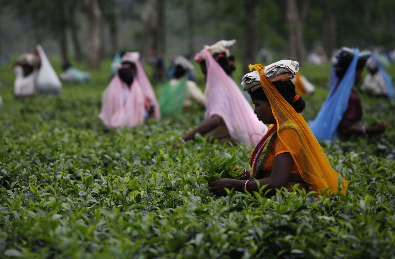 樂施會新近公布的研究顯示,為英國大型連鎖超市供應蔬果茶葉的農場與茶園,工人待遇差...