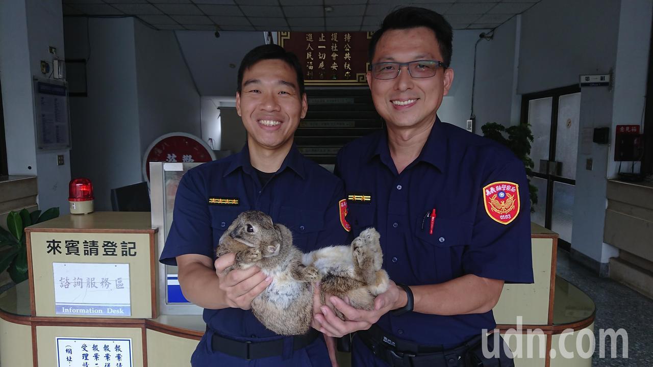 水上分局長程純濱(左)昨與同仁一起圍捕小灰兔,呼籲飼主來分局認領。記者卜敏正/攝...