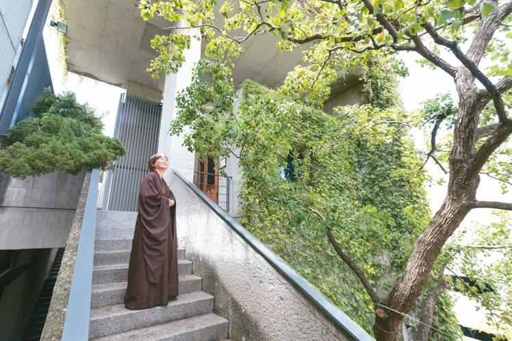 樹木在菩薩寺是視覺主角。 記者陳立凱/攝影