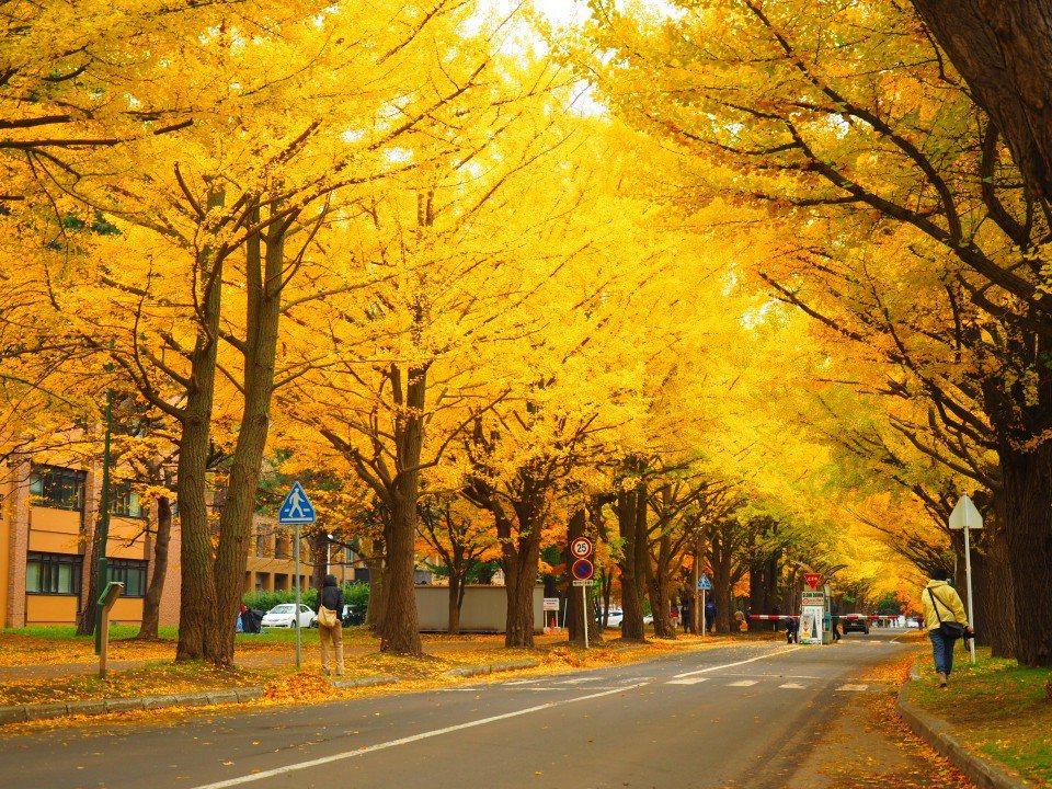札幌市區紅葉景點 北大校園