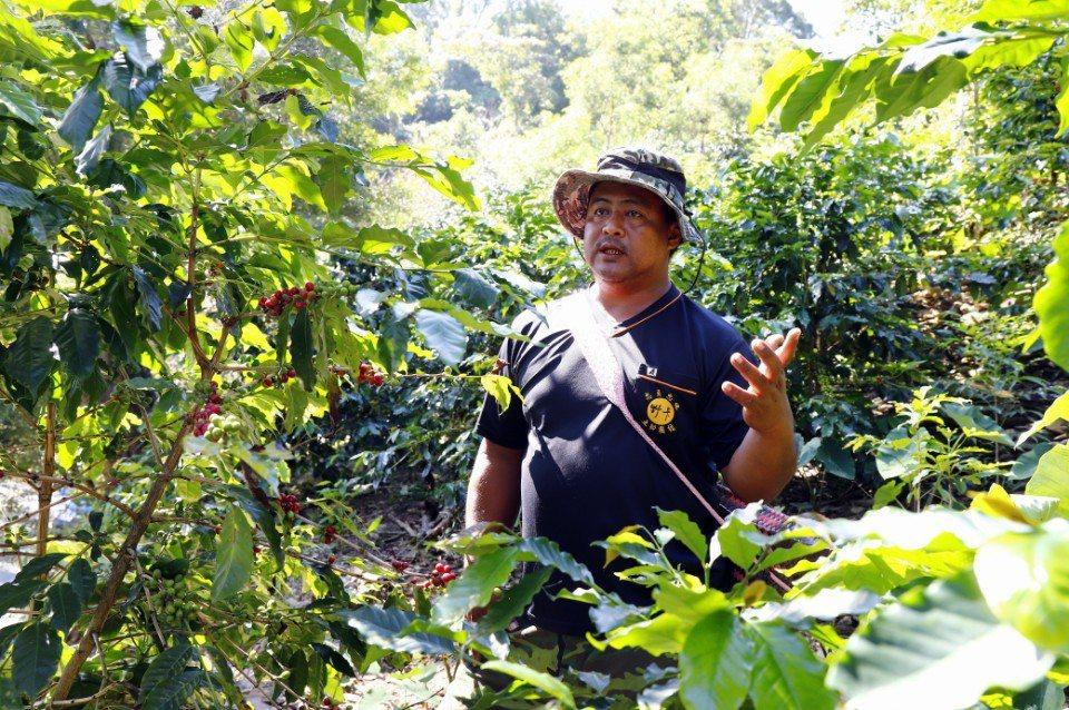 霧台產銷班班長杜俊文介紹如何採摘咖啡。