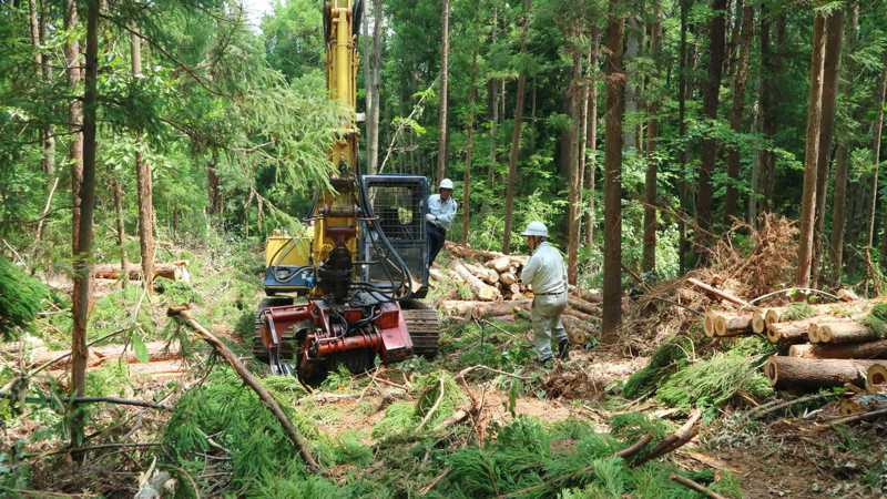 福島縣會津電廠把原本會淘汰的木材留下來,用於生質能發電。記者蔡佩芳/攝影