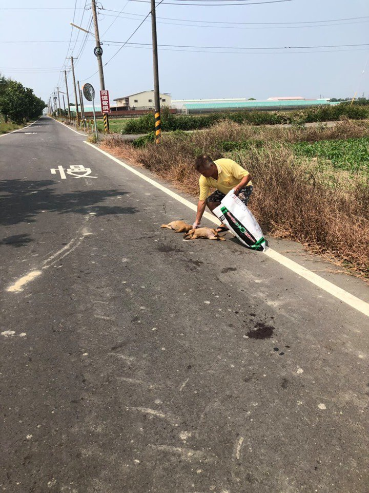 嘉義縣六腳鄉六南社區發展協會理事長楊清鎮、辜淑珍夫妻,日前在社區道路發現2隻遭撞...