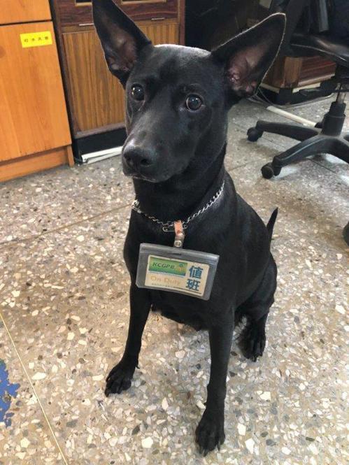 阿蓮分駐所內的警犬「CoCo」警覺性高,平日會陪同值班人員上班。記者徐白櫻/翻攝
