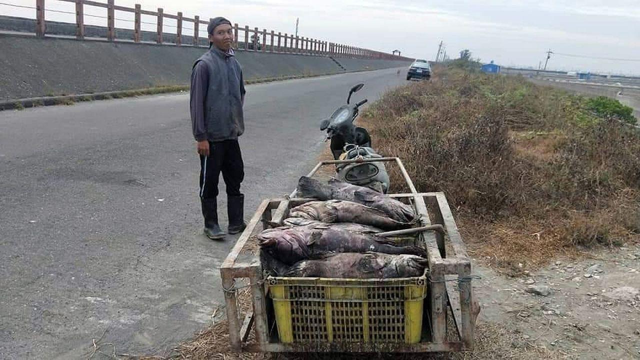居民投訴表示,養殖戶直接要外勞把死魚拉到塭旁,就地掩埋。圖/讀者提供