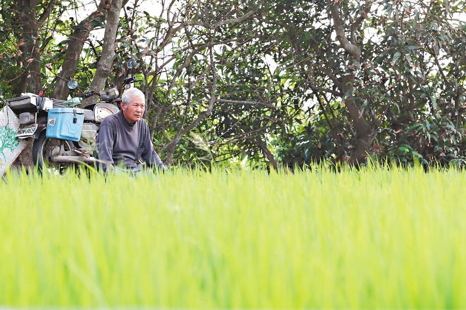 老農津貼增為7550元2月入帳 59萬名老農受惠
