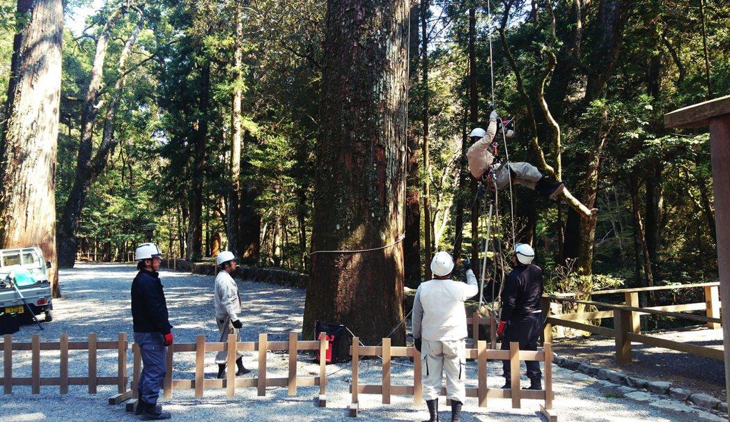 伊勢神宮的境內其中大約有一半為天然森林,另一半則是為了未來「神宮式年遷宮」所需要...