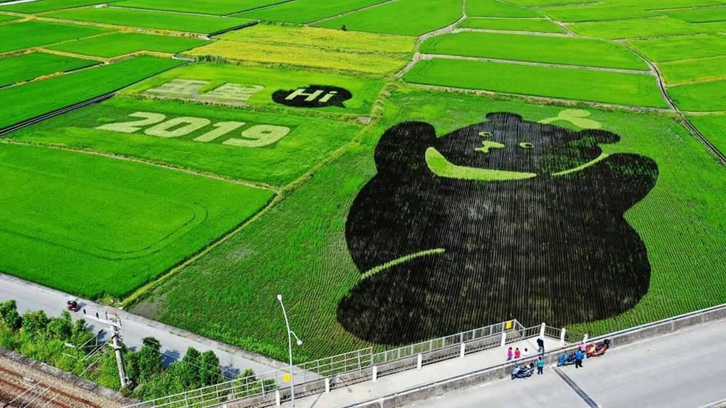 許又仁以無毒農業為起點,引入科學化管理,在花蓮這塊臺灣黑熊彩繪田區進行田間實驗,...
