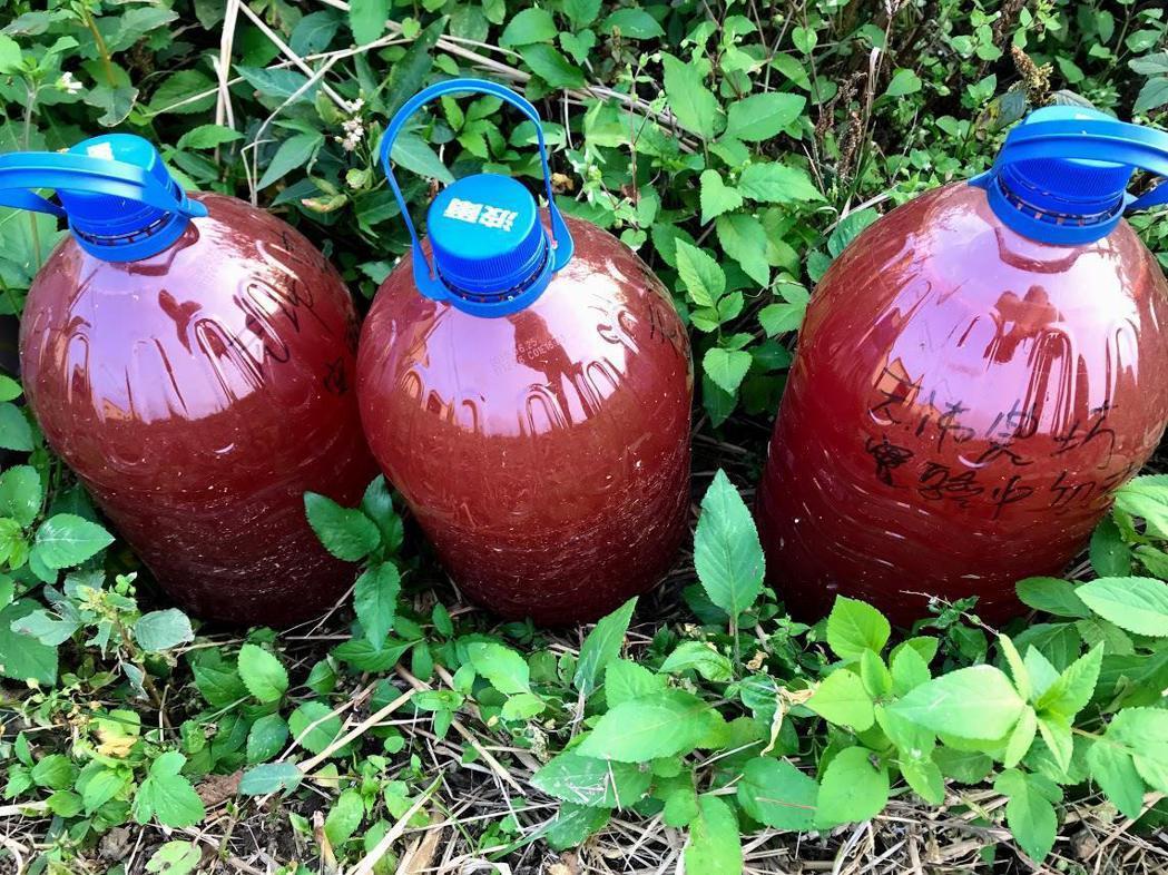 許又仁發現養豬廢水當中含有相當多的光合菌,經提煉培養後可作為植栽的天然生長促進劑...