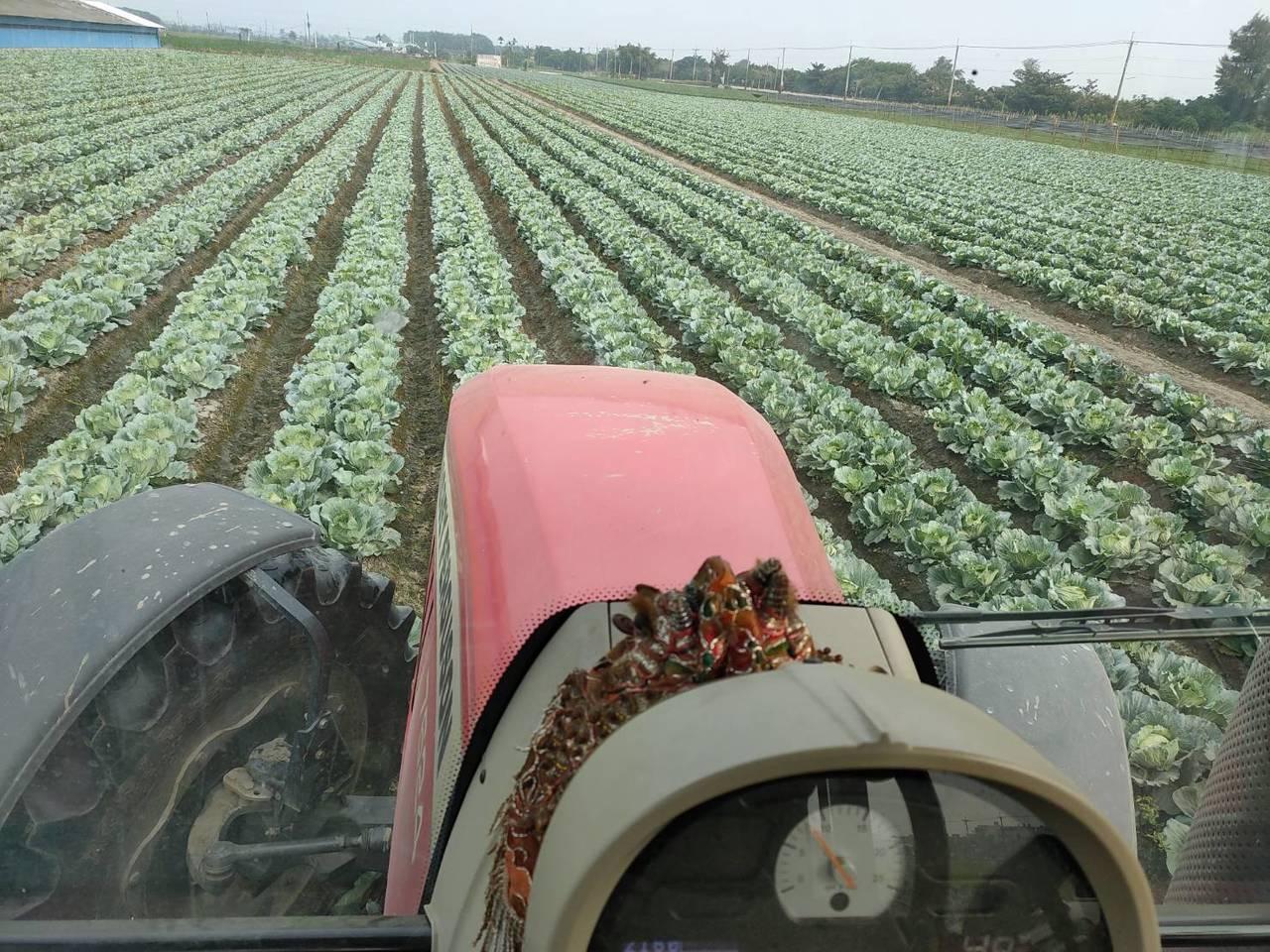 才10月,已有部分蔬菜產地出現低價高麗菜,有的開放民眾自採,有的農民認賠殺出,自...