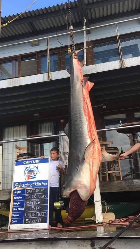 澳洲男孩釣到一隻重達314公斤的大鯊魚。圖取自臉書(@CoastfishTV)