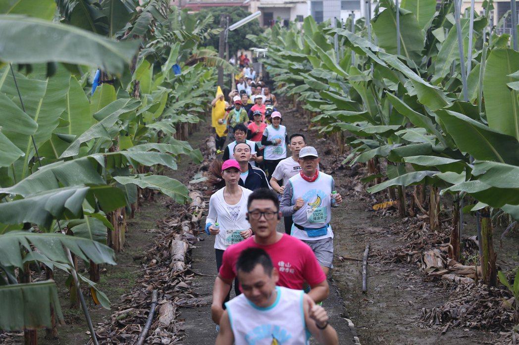 成功報名「旗山馬拉松」,可以抽香蕉樹。 圖/聯合數位文創提供