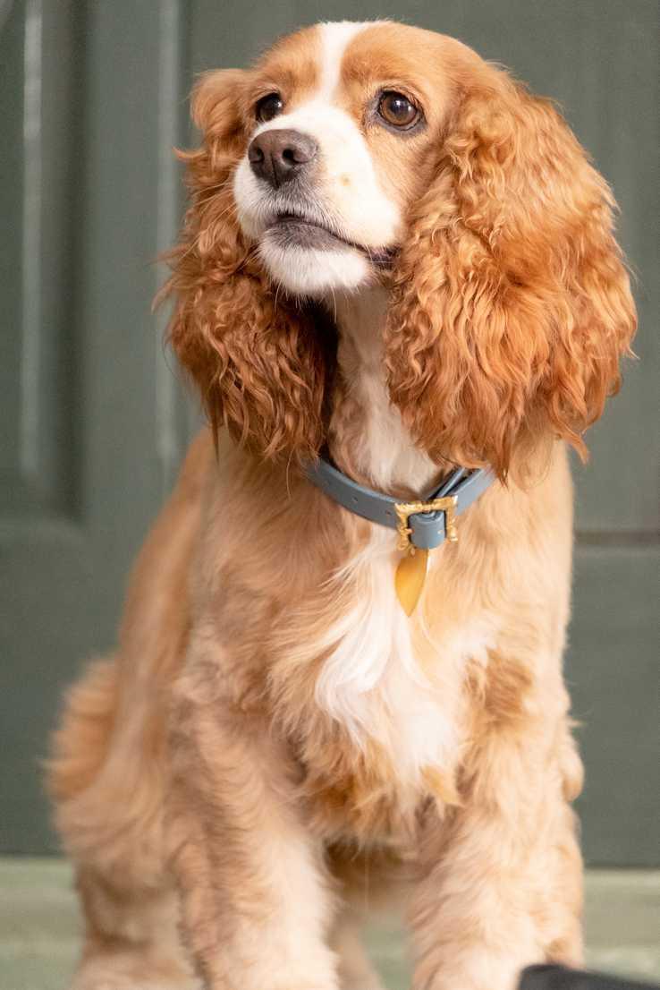 真狗版的「小姐」模樣可愛,大受網友讚賞。圖/摘自movieweb