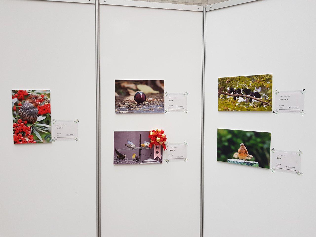 北市動保處與社團法人台北市野鳥學會舉辦「這什麼鳥啦!」鳥類野趣快閃攝影徵件活動,...