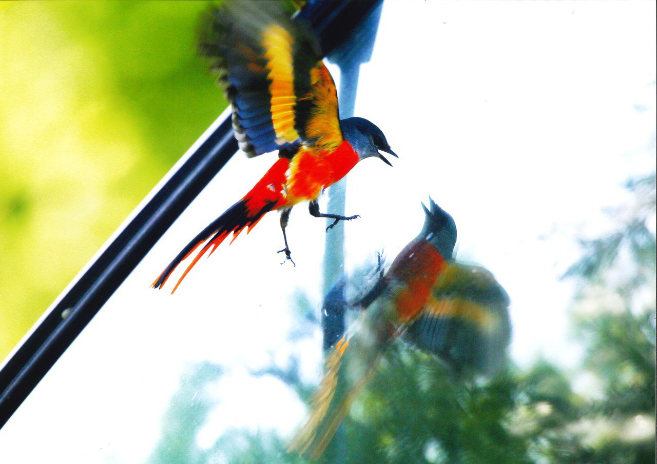「這什麼鳥啦!」鳥類野趣快閃攝影徵件活動昨公布前5名,4名優選獎包含何言拍下灰喉...