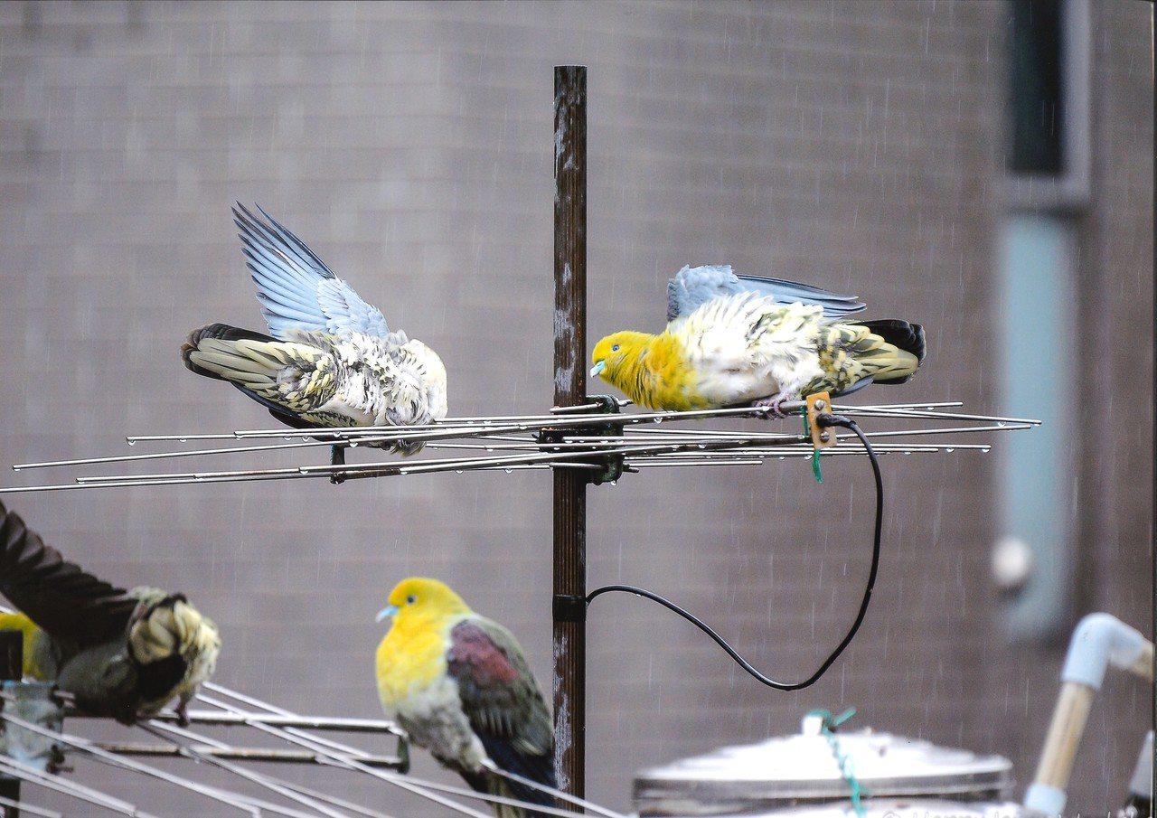 「這什麼鳥啦!」鳥類野趣快閃攝影徵件活動昨公布前5名,特優獎為賴致偉所攝的「體操...