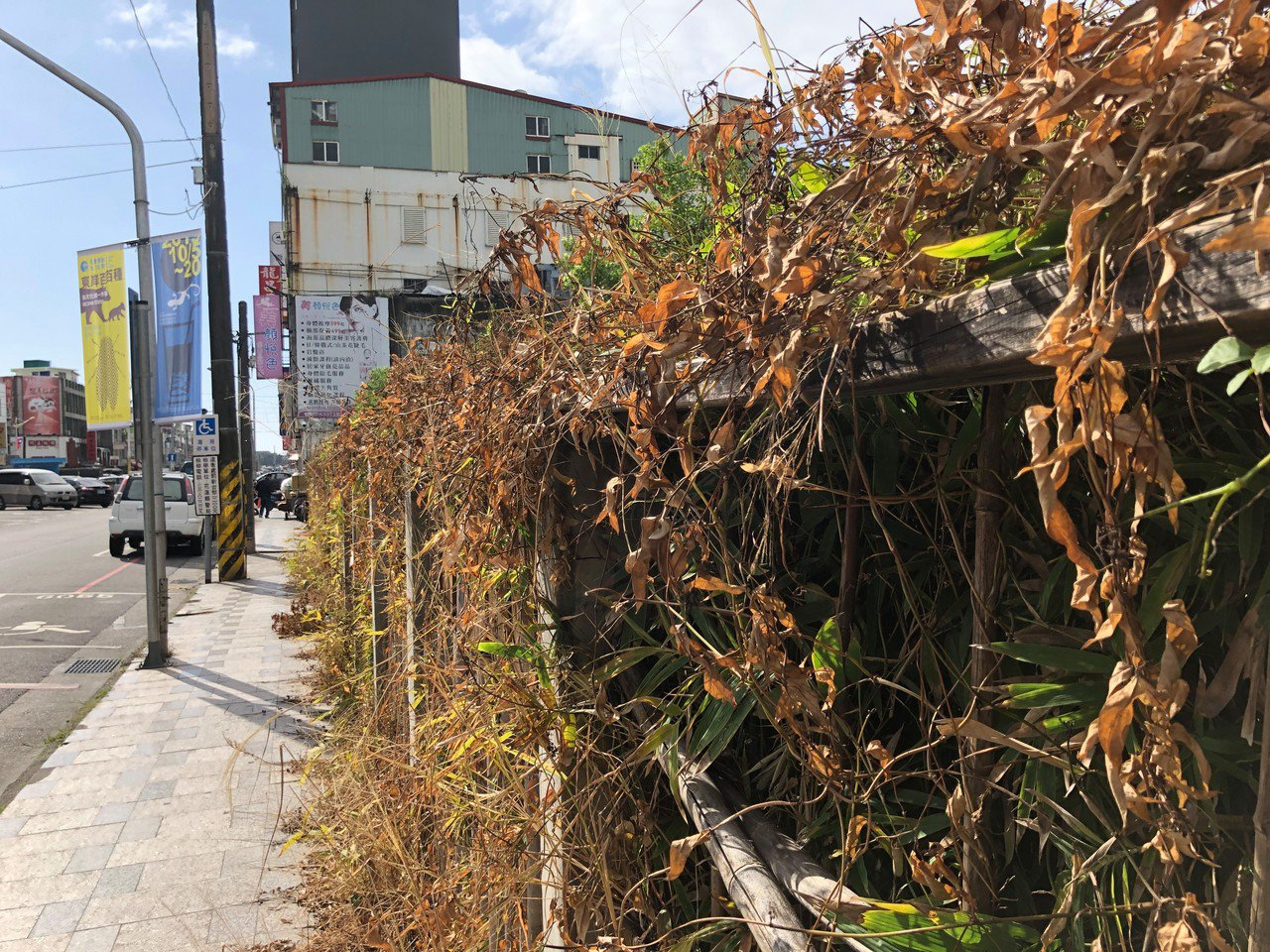 花蓮市區文創園區圍籬邊有大片噴灑除草劑痕跡,枯黃一片的景象讓許多民眾貼上網,更向...
