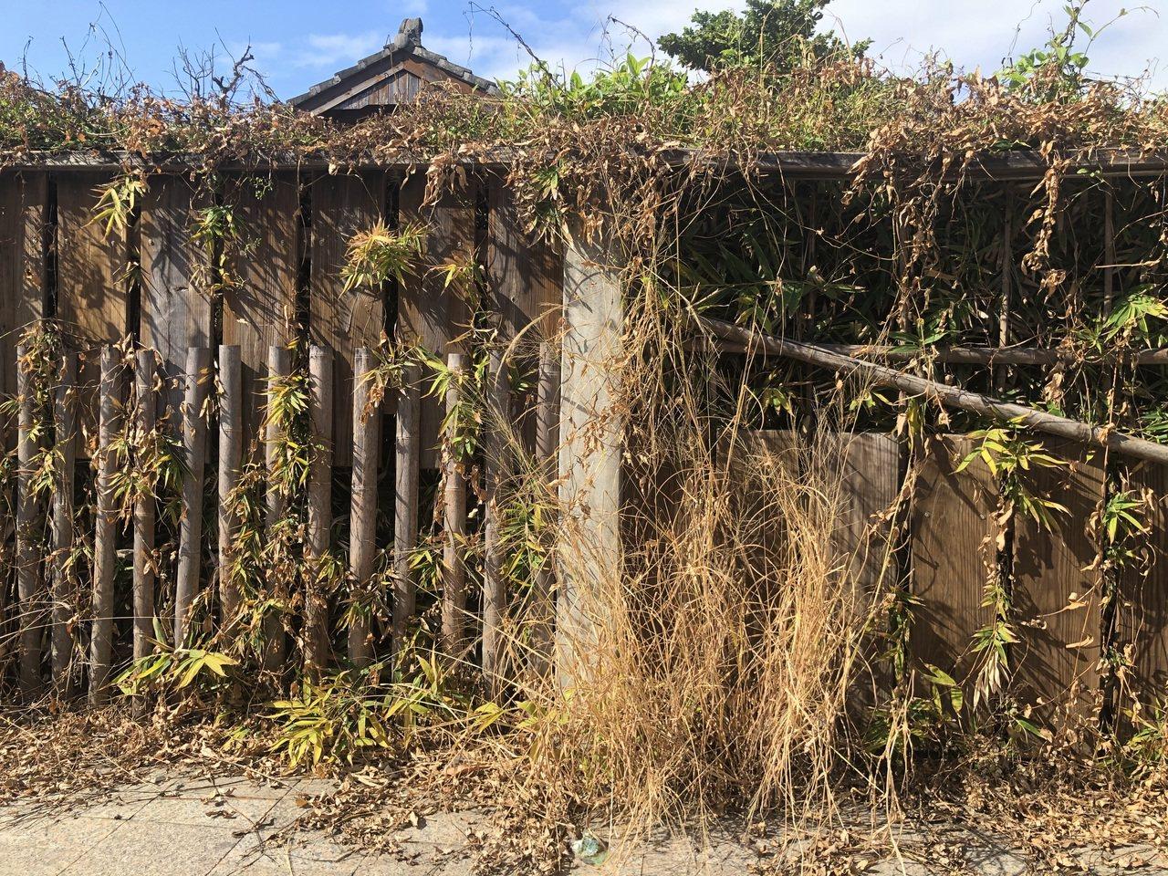 花蓮市文創園區圍籬噴除草劑,導致枯黃一片。圖/花蓮縣議員楊華美提供