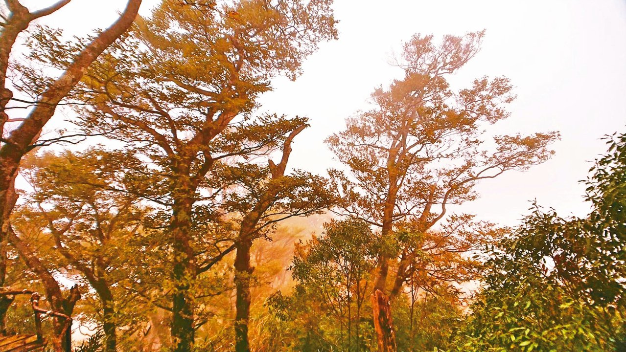太平山國家森林遊樂區擁有台灣最大的台灣山毛櫸原始林,入秋後,已經開始換新衣,山頭...