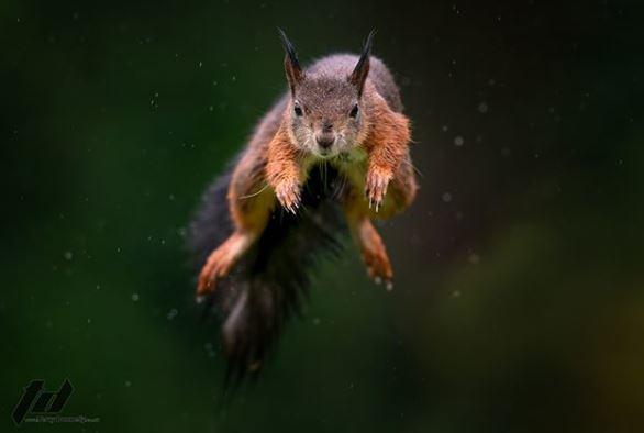 泰瑞住家附近有自然保護區,因此他常看見許多松鼠在樹叢間跳來跳去。 圖擷自inst...