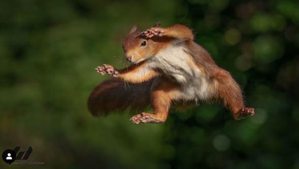 松鼠總是偷偷到泰瑞的院子偷榛果來吃,飛躍畫面都被清楚拍下。 圖擷自instagr...