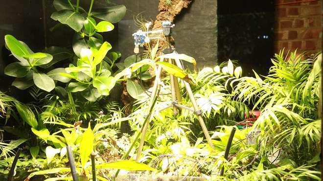 倫敦動物園利用鐵線蕨發電能力,讓植物能夠「自拍」。取自倫敦動物園網站
